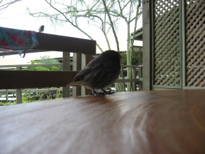 Finch on side table