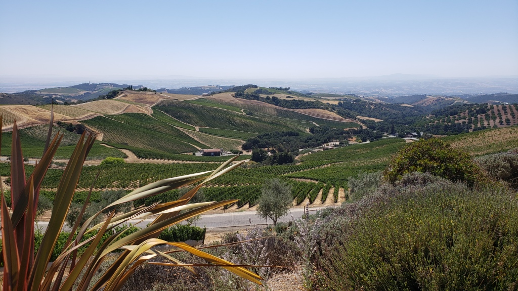 view of valley covered with vineyards
