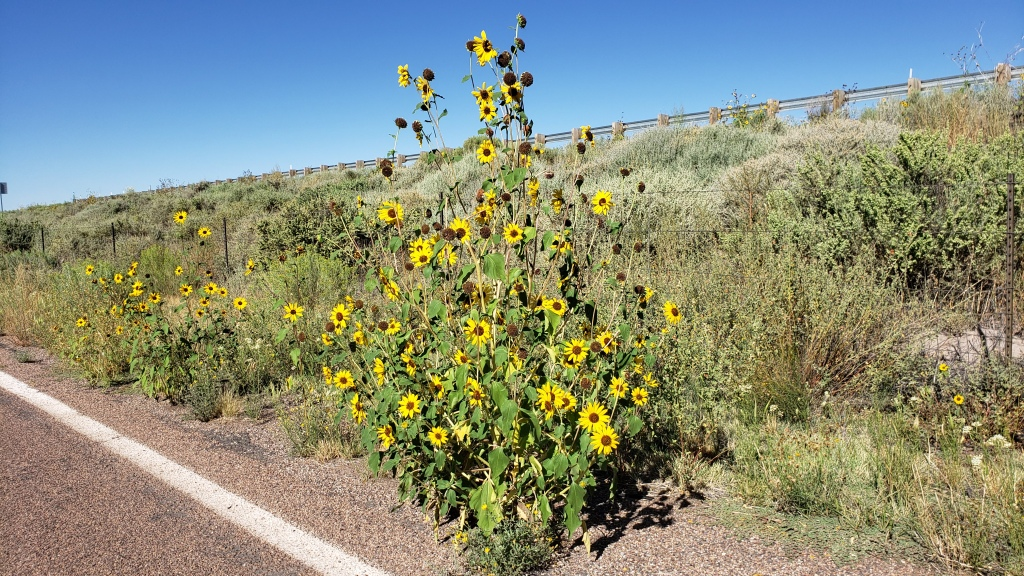 Wildflowers on the side of road