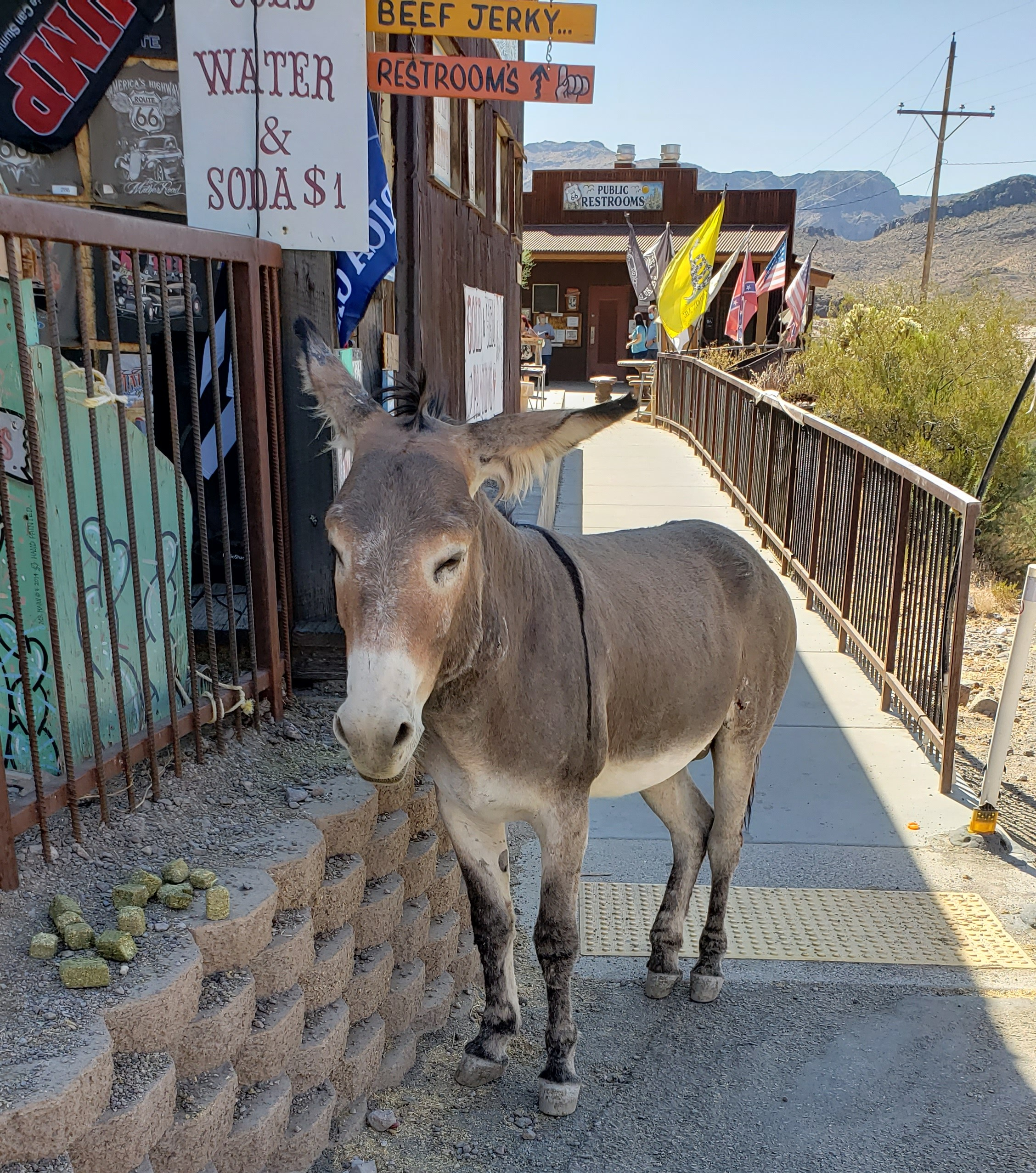 wild burro on sidewalk
