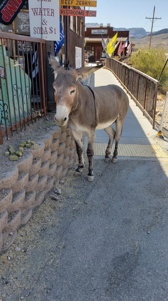 burro on the path