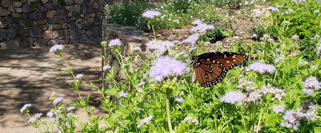 Monarch butterfly on bush