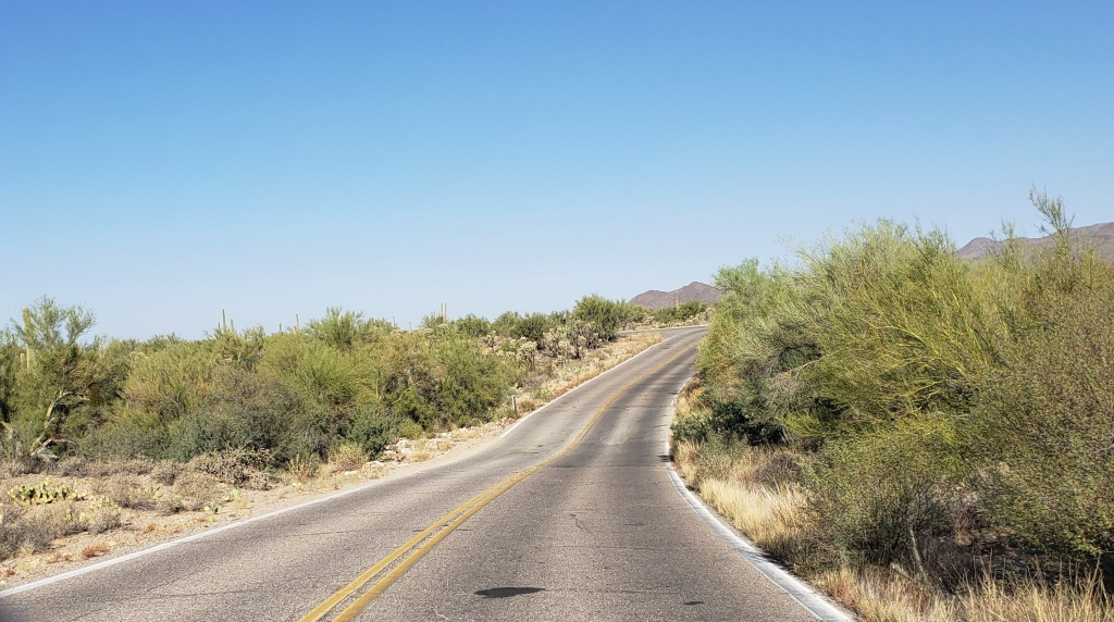 two lane road leading to museum lined with desert vegetation